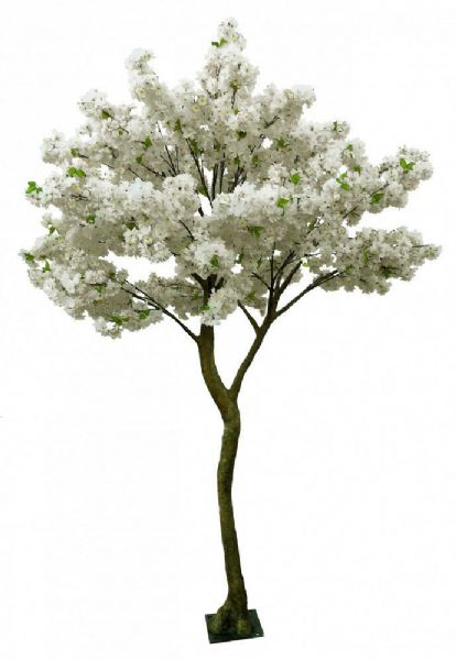 Wedding Cream Blossom Tree 2.7m